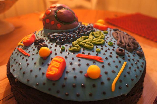 Cell Cake | Buda-B