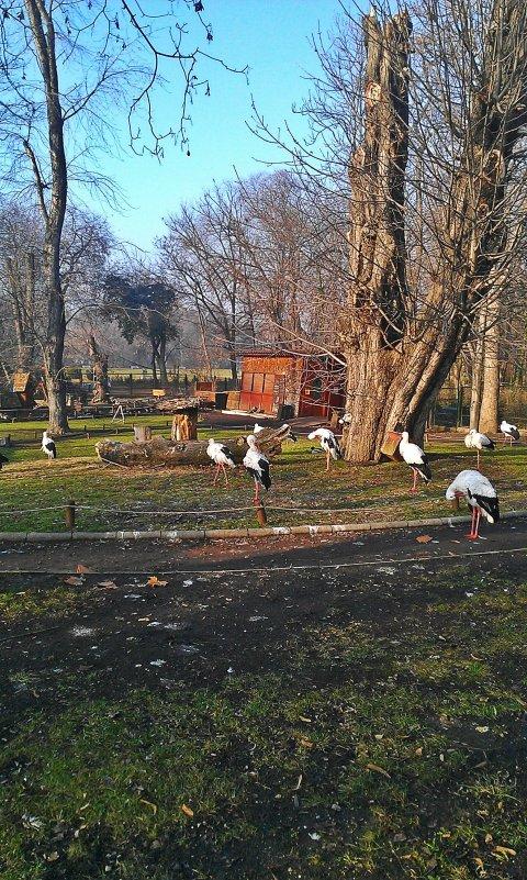 zoo birds