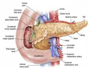 pancreas_asco
