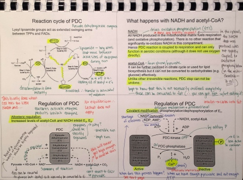 Furiously written notes from Friday's extra biochem lecture. I had to keep switching pens to keep my notes straight!