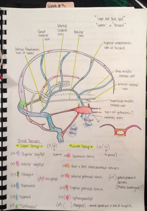Trying to visualize the dural venous sinuses