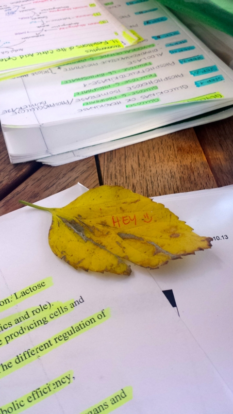 Jannie wrote me a little message on a fallen leaf ;)