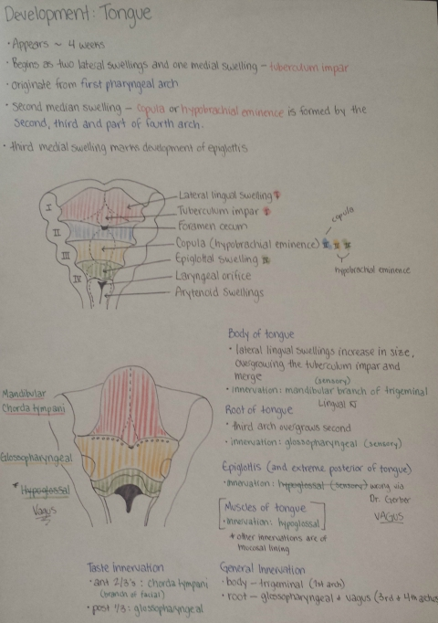 tongueembryo