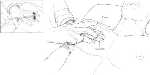 The tapping method we use to determine the location of the fluid/size of organs, etc. Termed percussion in clinical practice.