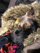 Sleepy Baloo at Costa Coffee this morning!
