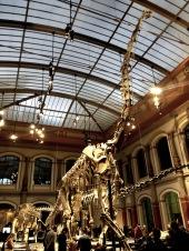 Natural history museum in Berlin