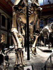 Natural history museum in Berlin